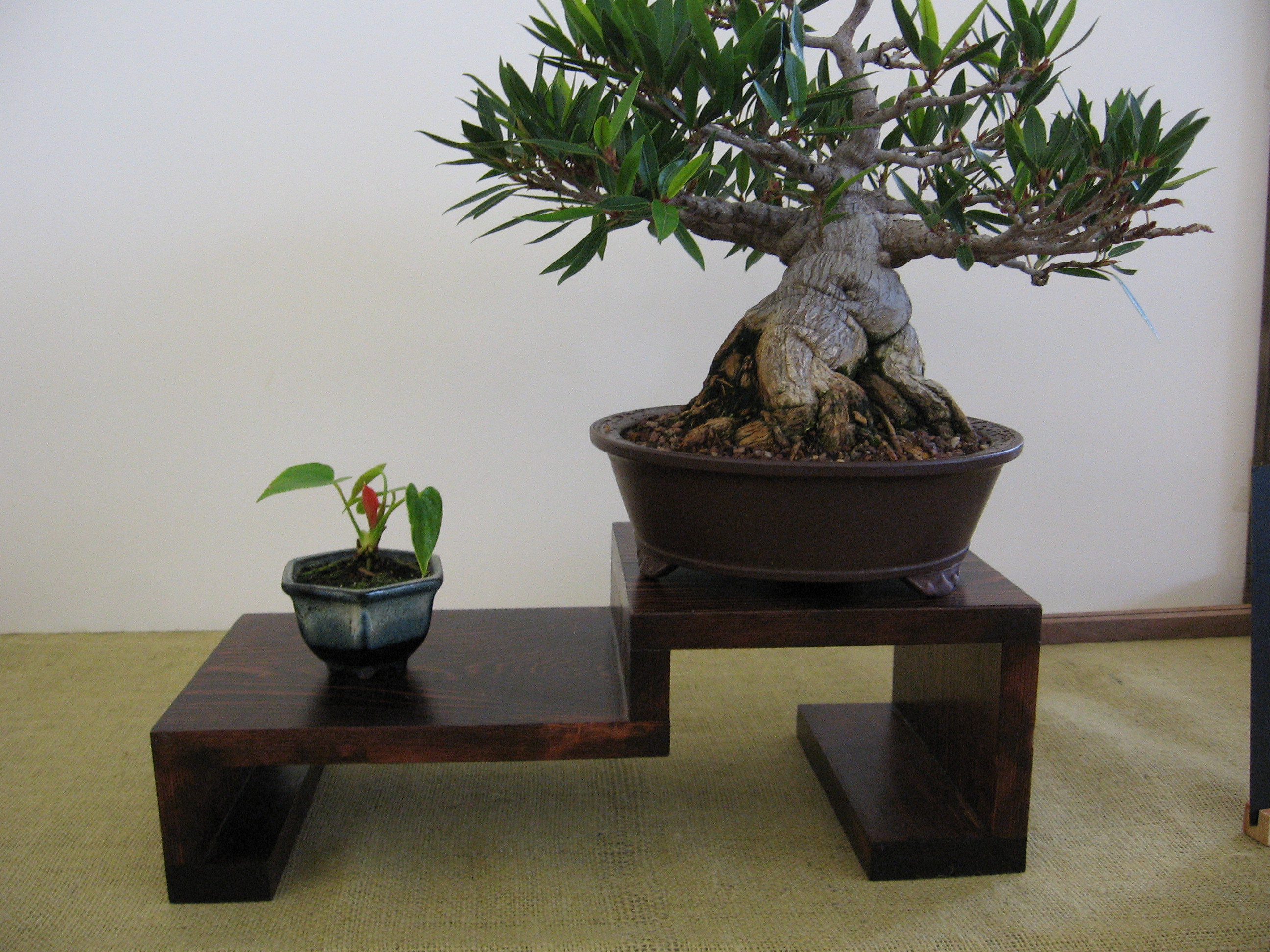 matching your bonsai to a pot part 2. Black Bedroom Furniture Sets. Home Design Ideas