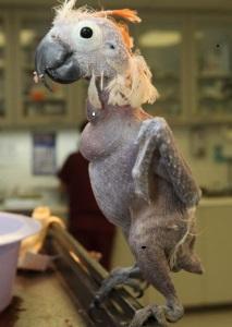 parrot300