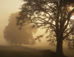 Tree (landscape)
