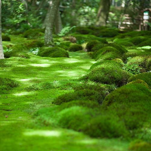 Moss is like people - Moosgarten kyoto ...
